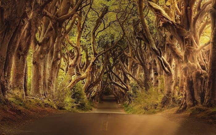 8 Razones por las que debes visitar Irlanda - Camino Real